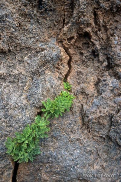 070 - Uparta roślinka