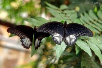 081 - Icod - ogród motyli
