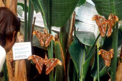 082 - Icod - ogród motyli