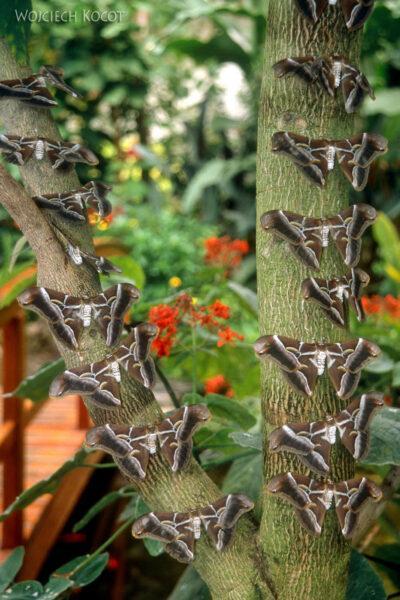 083 - Icod - ogród motyli