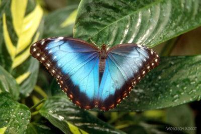 084 - Icod - ogród motyli