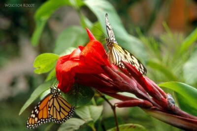 085 - Icod - ogród motyli