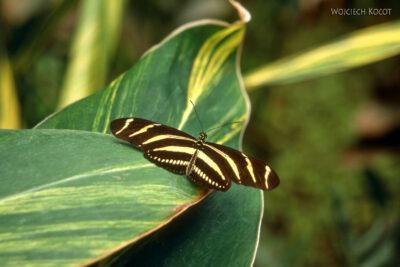 087 - Icod - ogród motyli