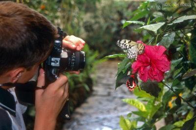 089 - Icod - ogród motyli