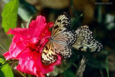 090 - Icod - ogród motyli