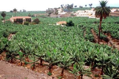 092 - Plantacja bananów