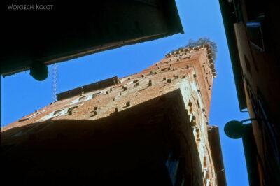 254 - Wieża zrosnącym dębem