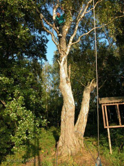 008 - Wysepka1 - Drzewo