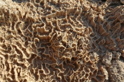 2036 - Skały pochodz.koralowego