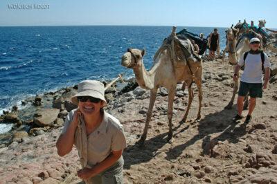 6078 - Abu Galum - Camel naholu