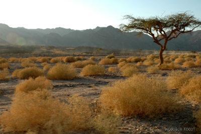 6177 - Abu Galum - Przezpustynię
