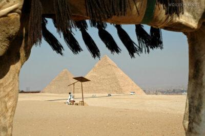 9145 - Giza - Widok spod camela