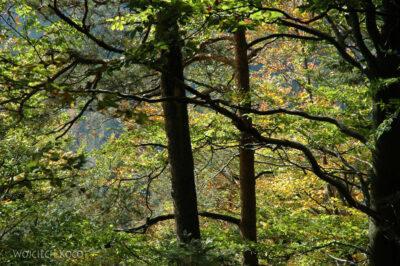 091-Drzewa