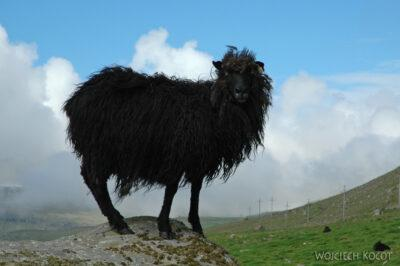 03189 - Owca