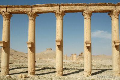 2137 - Palmyra - ruiny miasta
