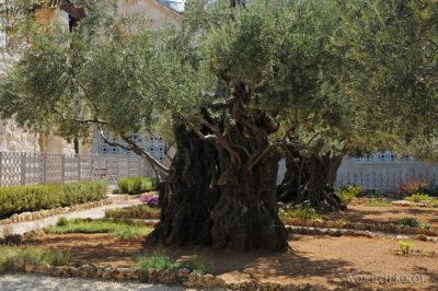038 - Ogród Zdrady