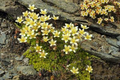 6063 - Kwiatuchy