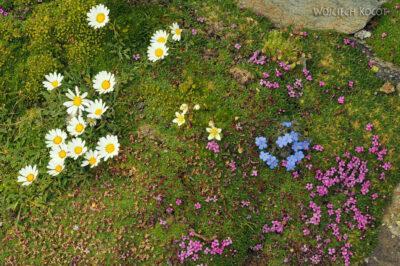 6066 - Kwiatuchy