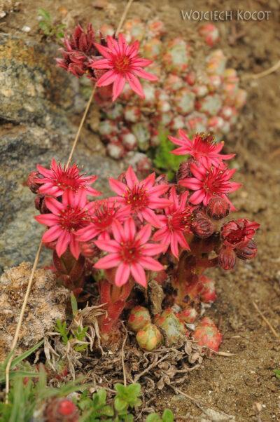 6073 - Kwiatuchy