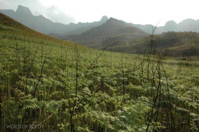 SA10131-Royal Natal National Park