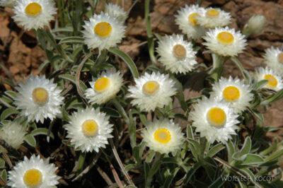 SA11037-Kwiatuszki