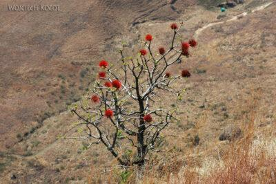 SA11050-Wycieczka doMushoroom Rock