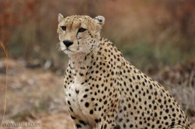 SA05035-Gepard