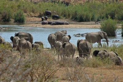 SA05308-Słonie iHipopotamy