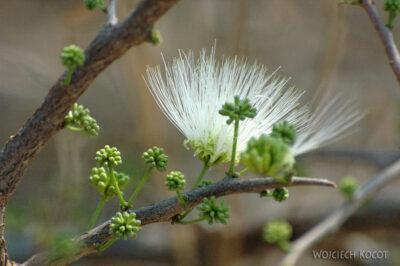 SA05496-Piękne kwiaty nakrzewie