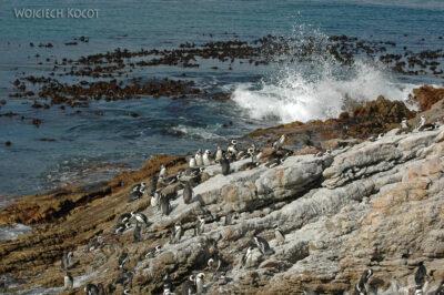 SA25046-Stony Point - Pingwiny