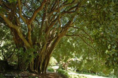 SA27022-Ogr.Bot - Drzewo naddiabłem