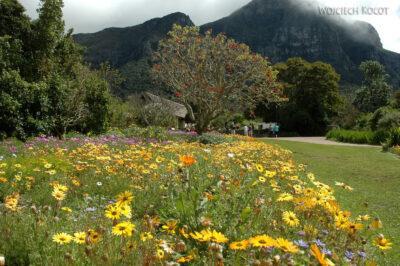 SA27155-Ogr.Bot - Wioswnne Kwiaty Przylądkowe