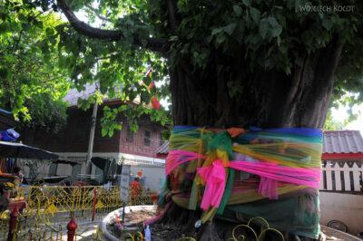 Udekorowane drzewo