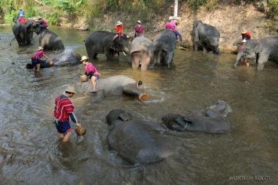 Kąpiel słoni