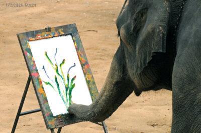 Słonie malują obrazy