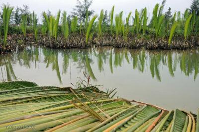3W5091-Hoi An - plantacja palm