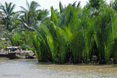 3W8016-Delta Mekongu - palmy