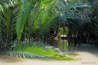 3W8069-Delta Mekongu - palmy