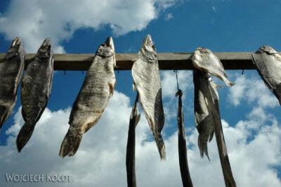 U03023-Suszone ryby