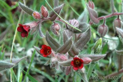 U05046-Ładne Kwiatki