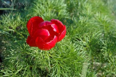 U06012-Ładne Kwiatki