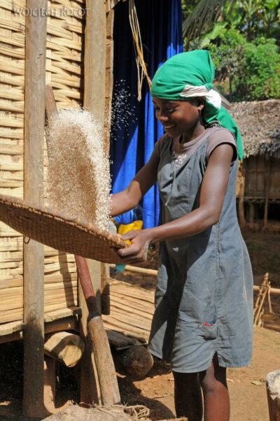 Ma07040-Przesieweanie ryżu