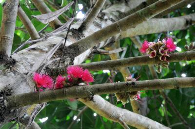 Ma07114-Kwiatuchy nadrzewie