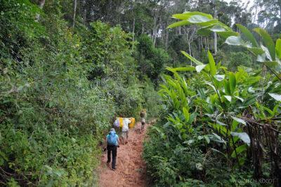 Ma09057-Przez las deszczowy