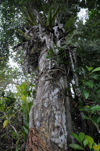 Ma09059-Drzewne posożyty