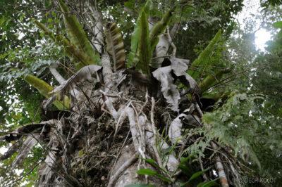 Ma09062-Drzewne posożyty