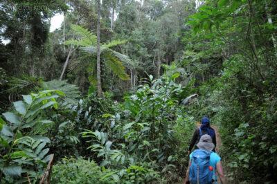 Ma09066-1Przez las deszczowy