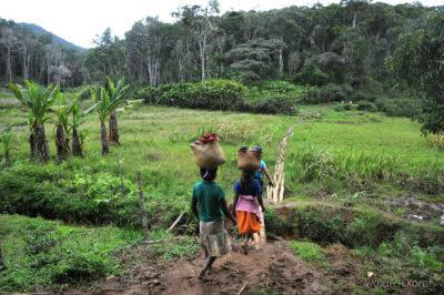 Ma09071-Przez las deszczowy