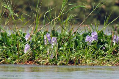 Ma13039-Wodne kwiatki