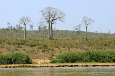 Ma15021-Baobaby